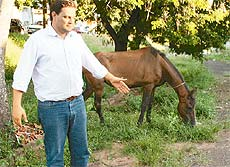 O prefeito e o cavalo abandonado